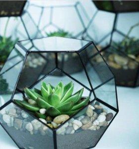Флорариум (цветы)