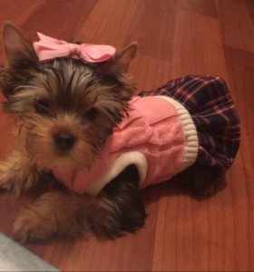 Одежда для собак (платье)