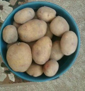 Продаю картофель