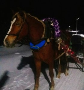 Сани для лошади