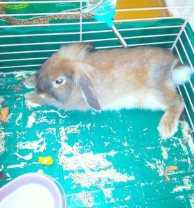 Продам клетку и кролика 7 месяцев ходит на лоток