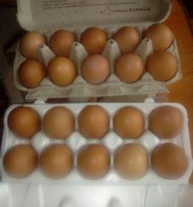 Куриные яйца, домашние