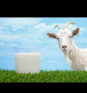 Козье молоко полезное