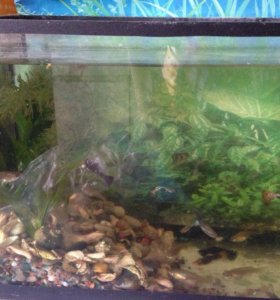 Продам аквариум и рыбок( гуппи, сомы и черные )