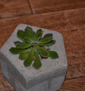 Цветы в бетонном кашпо