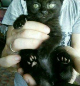 Плюшевые котятки