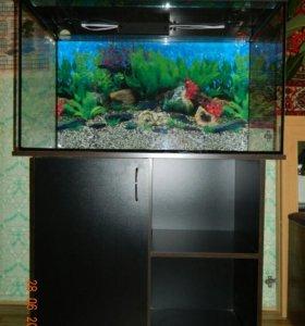 Аквариумы, рыбки, растения, корма