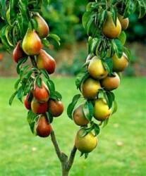 Обрезка фруктовых и хвойных