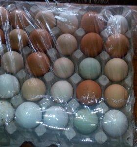 Яйца на инкубацию(смешанное стадо)