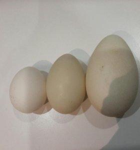 Яйца(разные)