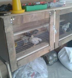 Инкубаторские циплята, а так же кроликики