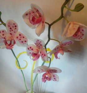 Орхидея фаленопсис.