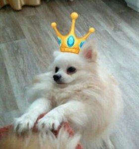 Вязка.Принц Арчи ждет Принцессу