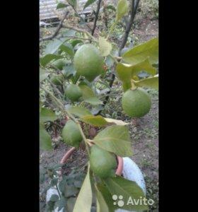 Лайм-лимон