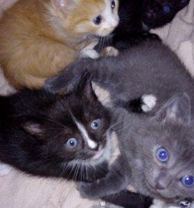 Котики, котята, даром