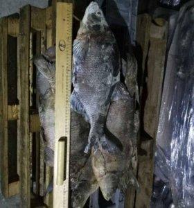 Рыба оптом свежемороженая и вяленая