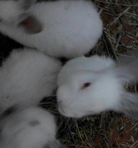 Кролики, мясо кроликов