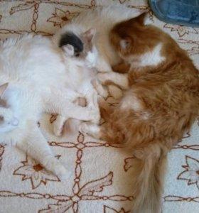 Отдам кошек в добрые руки