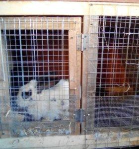 Клетка с кролихой