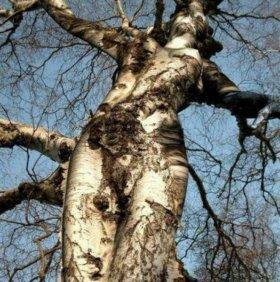 Обрезка плодовых, декоративных деревьев