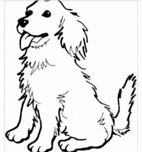 Предлагаю услуги выгула собак в городе Ноябрьск