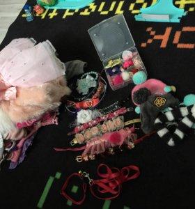 Одежда и аксессуары для собаки