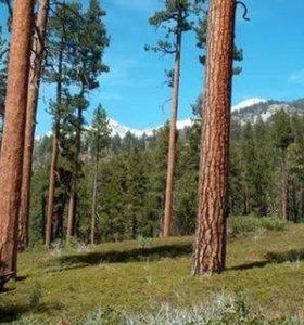 Деловой лес 144куба