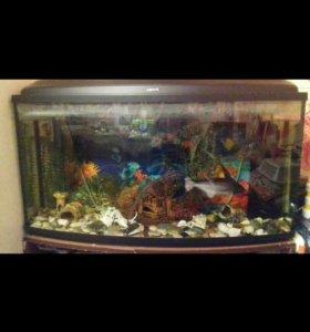 Укомплектованный аквариум с рыбками