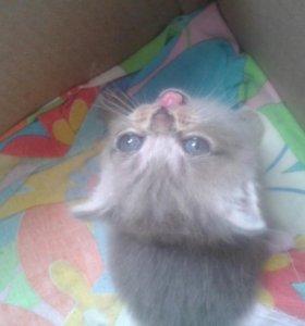 Породистые котейки