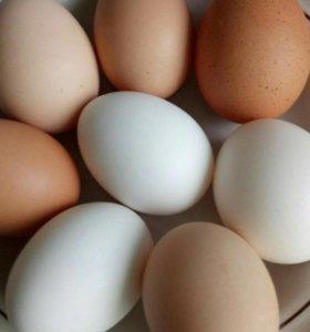 Яйца домашних курочек