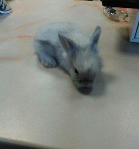Карликовые и декоративные  кролики