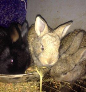 Кролики месячные смешанных пород.