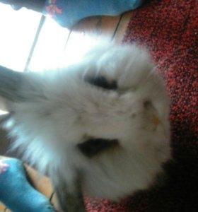 Вообщето это кролик декоративный😃😃😃