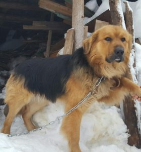 Отличный пёс в поисках старых или новых хозяев