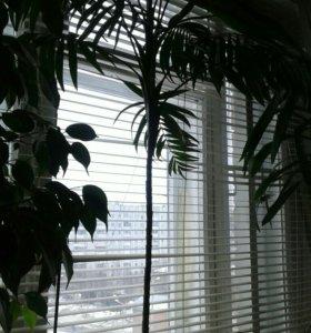 Цветы фикус.пальма.юкка