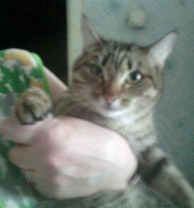 🐈 срочно кота в добрые руки.