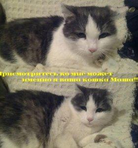 Кошки-котята-даром