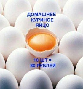 Свежее домашнее куриное яйцо