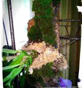 Орхидея дендробиум на блоке!