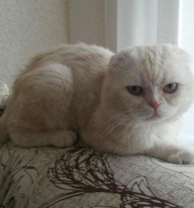 Кот розовый мрамор