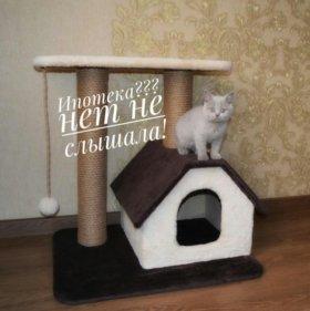 Когтеточка +домик+две лежанки+игрушка+целые обои !
