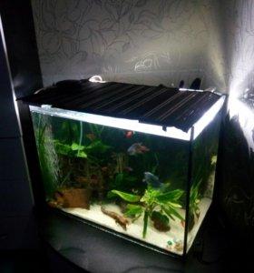Аквариум с рыбками 70 литров.