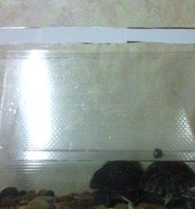 Продам 2 красноухих черепах