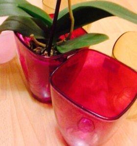 Подставки под орхидеи