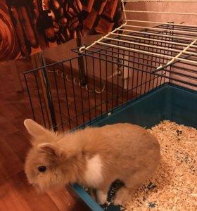 Продам клетку с кроликом