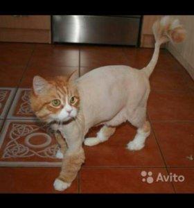 Стрижка котов. Груминг