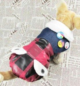 Курточка для мелких пород собак