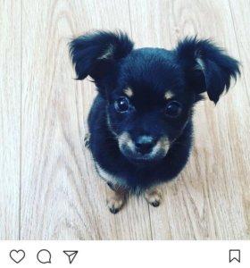 Только сегодня щенок той