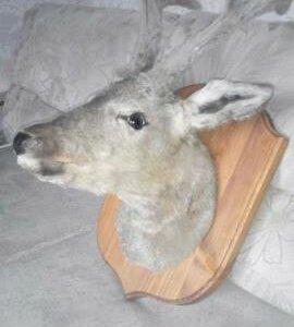 Чучело козла