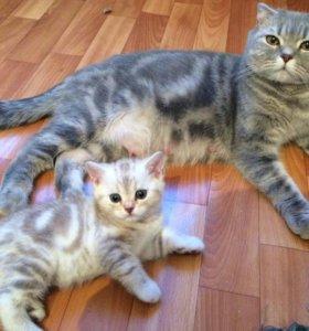 Котята страйт и фолд